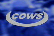 Cows. Image credit: Ella Communications.