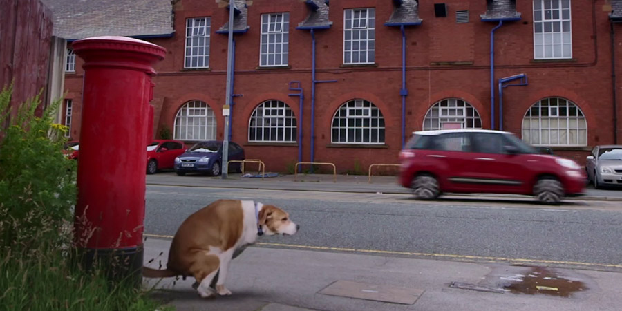 Dog going to the loo by a postbox.
