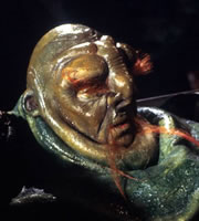 The Hitchhiker's Guide To The Galaxy. Prostetnic Vogon Jeltz (Martin Benson). Image credit: British Broadcasting Corporation.