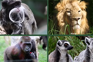 Comedians voice comic advert to save ZSL Zoos